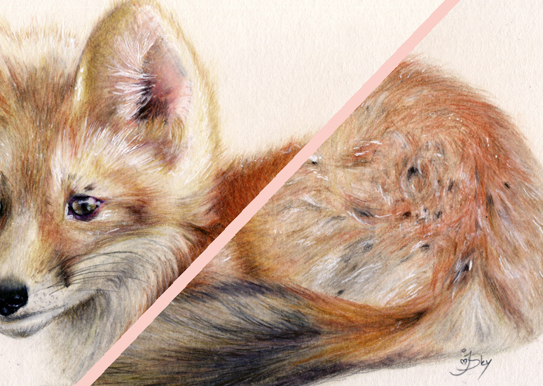 Fox drawing close up details