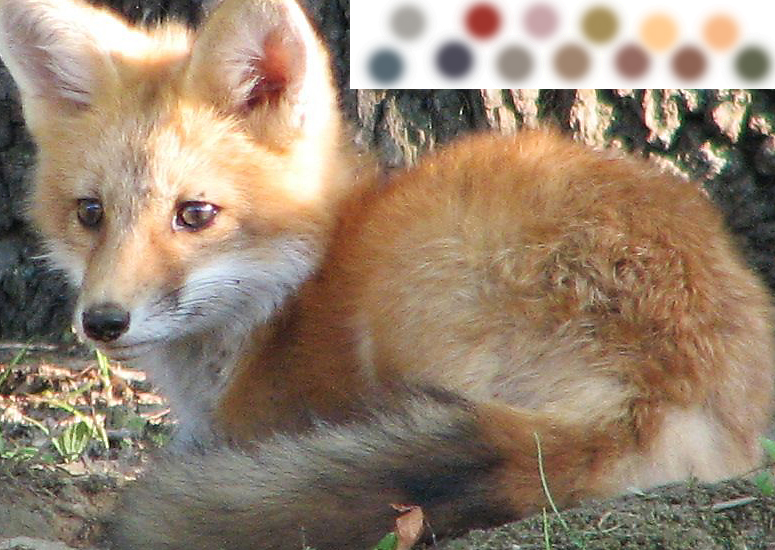 Fox Drawing reference Picture