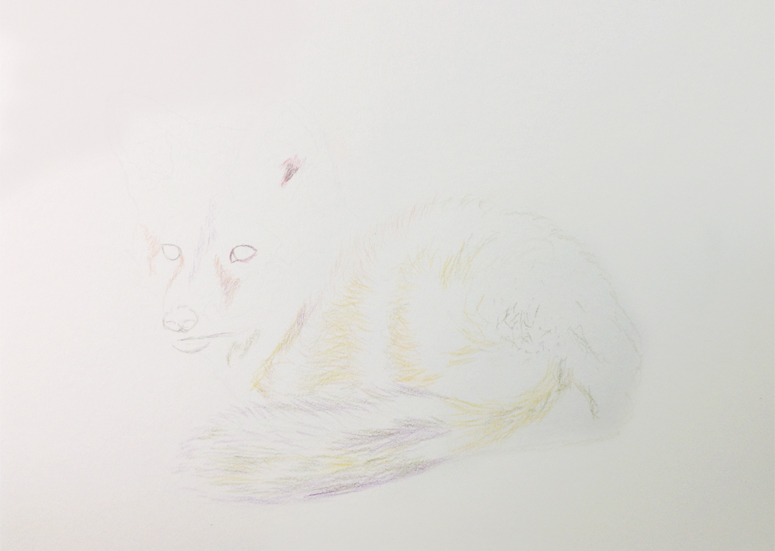 Fox Drawing Step 3