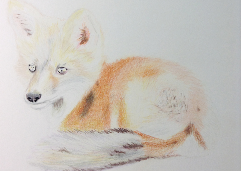 Fox Drawing Step 5