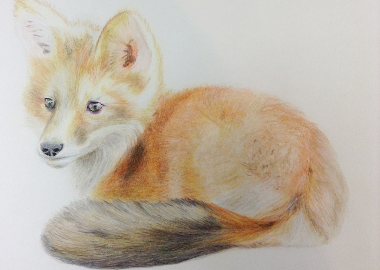 Fox Drawing Step 8