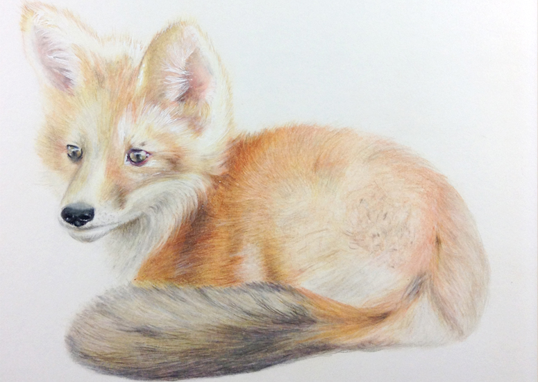 Fox Drawing Step 9