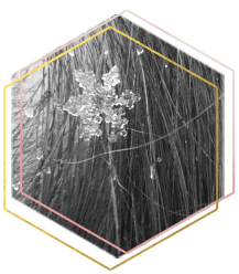 BnW Photography of a Snowflake