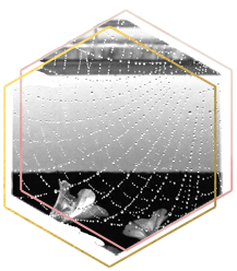 black and white photography of raindrops in a spiderweb