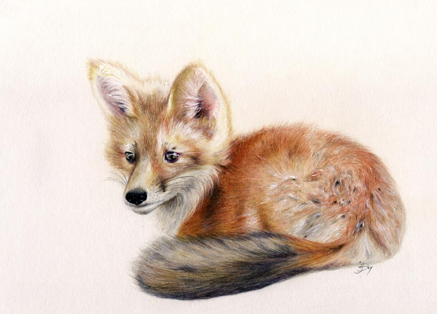 colored pencil drawing of a little fox cub by maryjane sky fine art